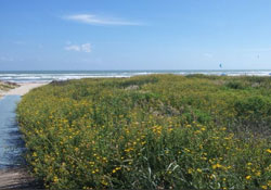 Pet friendly by owner vacation rental in South Padre island
